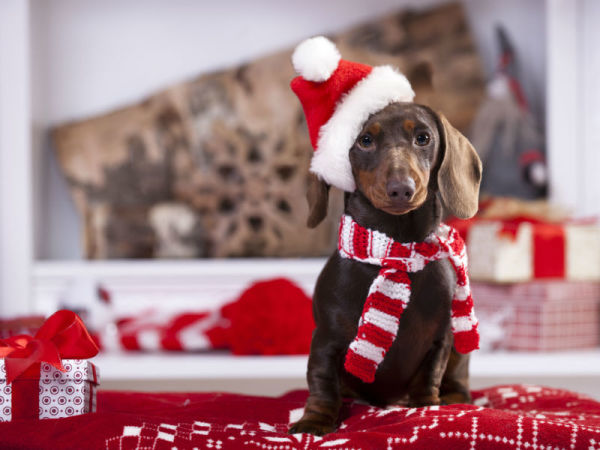 Five Ways to Celebrate the Holidays With Your Dog