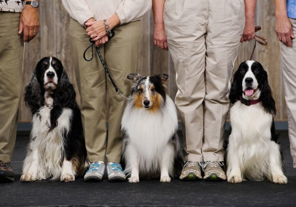 Heard 'Round the Ring: Common Dog Show Terms