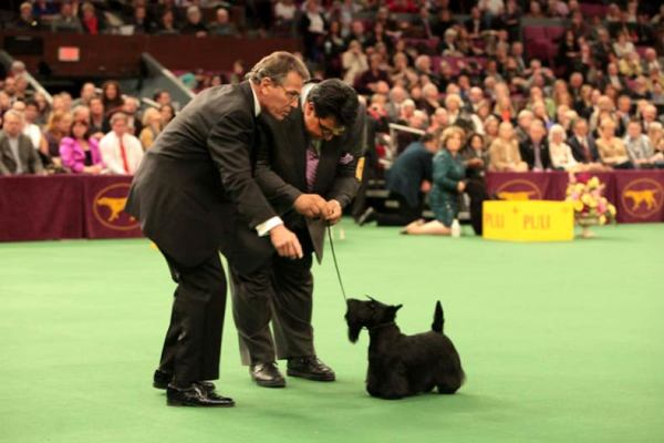 How Judges Pick the Winners at a Dog Show